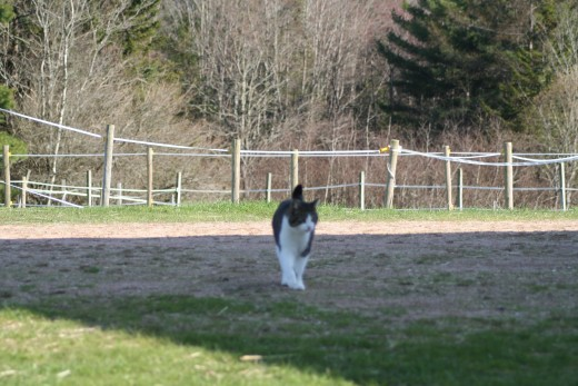 Robin returning to the barn after a hard days work (play!).