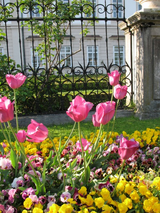 Lovely Flowers in Mirabell Garden