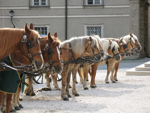 Horses waiting to give a tour