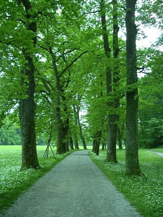 Garden path in Hellbrunn