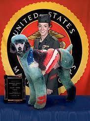 Patriot Poodle