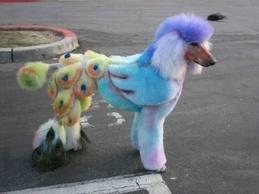 Bird Poodle
