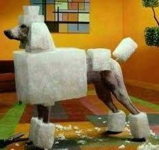 Square Poodle