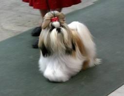 Don't You Wish You Had Hair Like Mine?