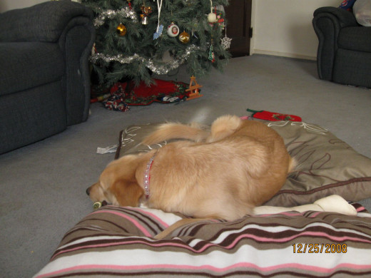 Christmas nap after opening presents!