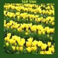 Tulip Town, USA