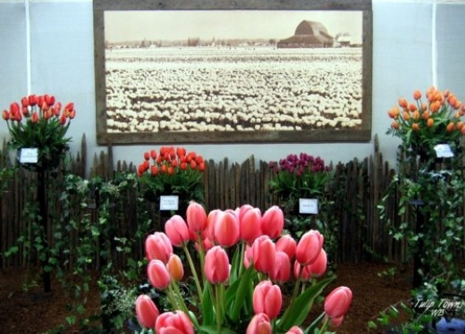 how to care for fresh cut tulips