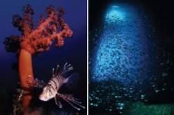 Scuba Diving in South Korea