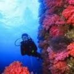scuba-diving-jeju.jpg