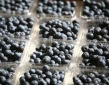 blueberry, blueberries, super-food, top 10 super foods