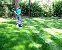 cutting the grass, cut the grass, grass, watering the grass