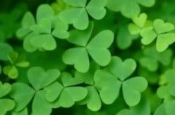Saint Patrick's Day Unit Study - Language Arts & Mathematics