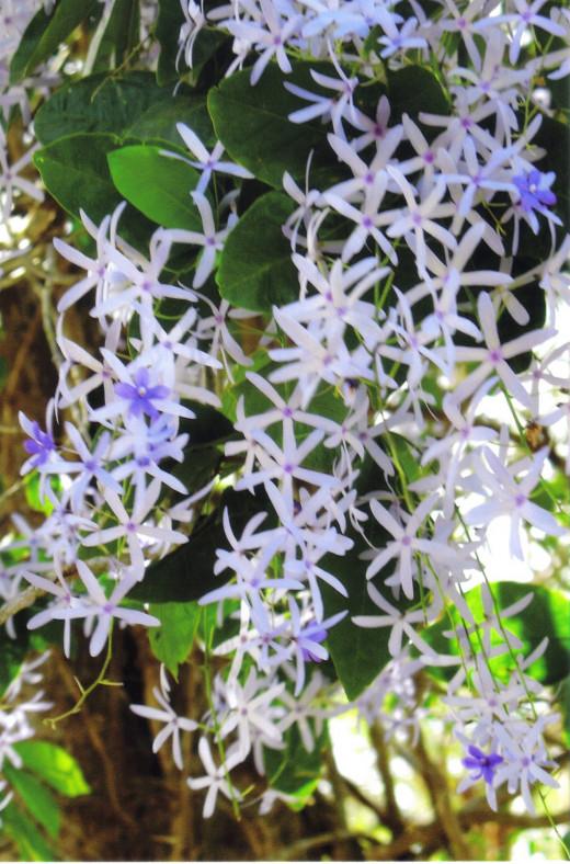 Beautiful flowering plants abound