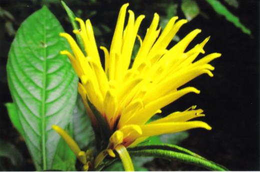 Abundant blooming beauty