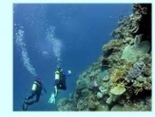 great-barrier-reef-diving.jpg