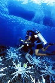 sulawesi-scuba-diving.jpg