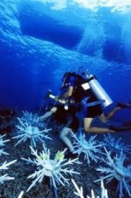 sulawesi-scuba-diving.jpg
