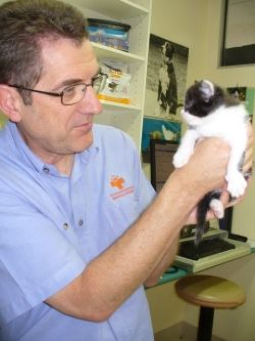 Vet with one of my kittens