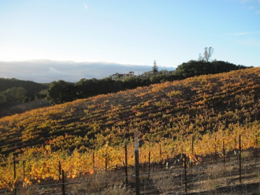Autumn Color in the Vineyards