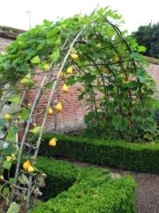 vegetable archway