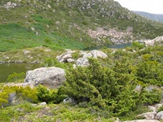 Tarns nestled between rocky hills and alpine flora