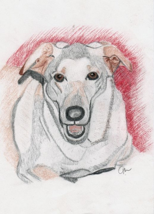 Pastel Hound