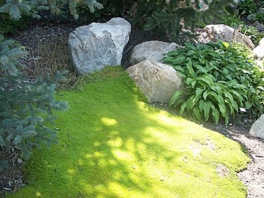Green Colorado