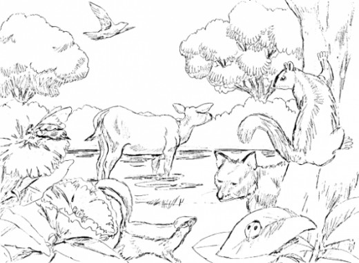 Creation Coloring Pages Pdf : Free coloring pages of th day creation