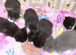One of Star's Litters
