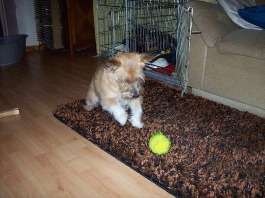 Kitty loves balls so much!