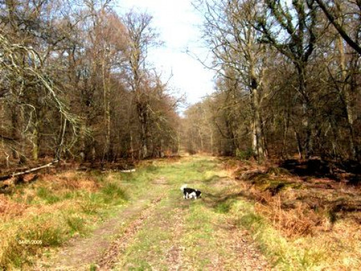 A New Forest Track