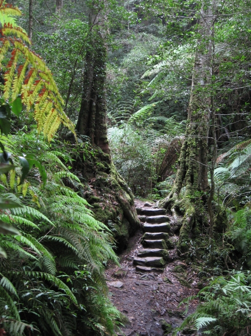 Track through the rainforest, Blue Mountains