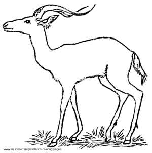 Impala Coloring Pages