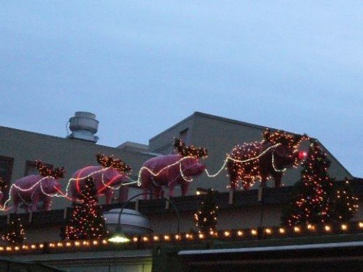 Flying Christmas Pigs