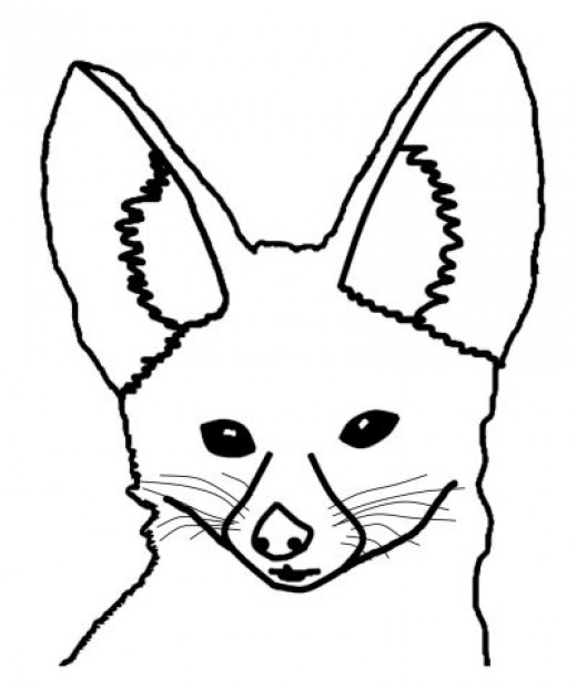 Fennec Fox Coloring Pages