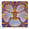 Perception and Optical Illusions