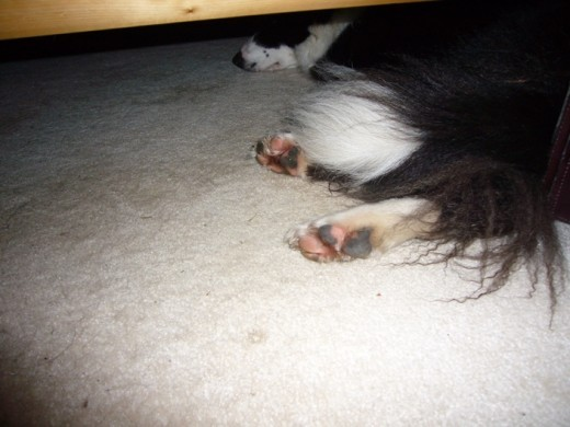 Noon - Time to take a nap under the bed