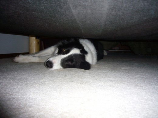 1 pm - Where's Tim? - Taking another snooze under the bed