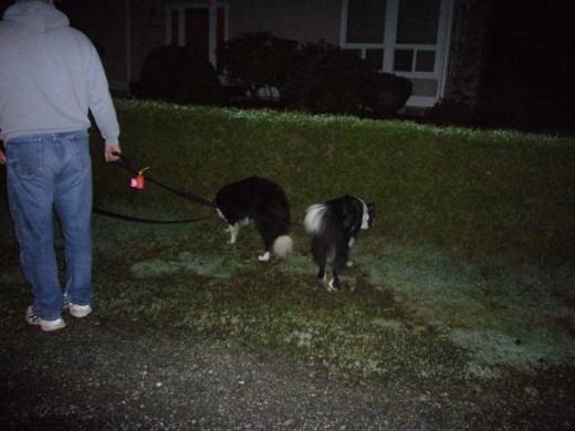 An evening walk before bedtime