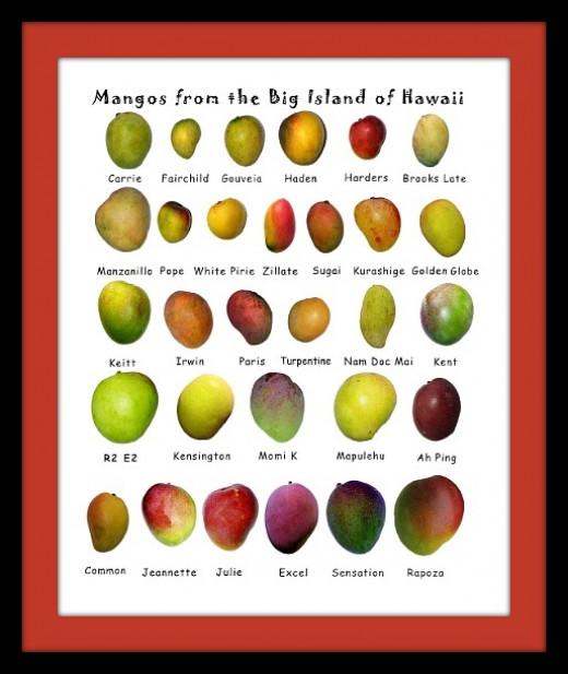 Big Island of Hawaii Mango Varieties