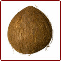 Tale of a Coconut