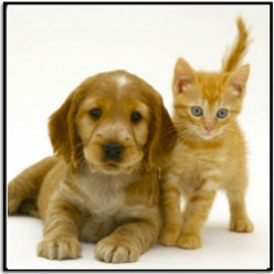 Chazz's Pet Pages: Everything About and For Dogs and Cats