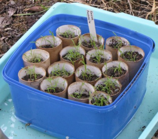 growing vegetables tips