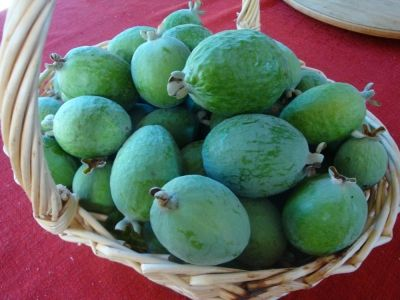 First batch of huge feijoas