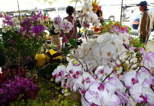 Orchid Vendor Booth at Hilo FM
