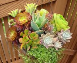 Grow a Succulent Garden