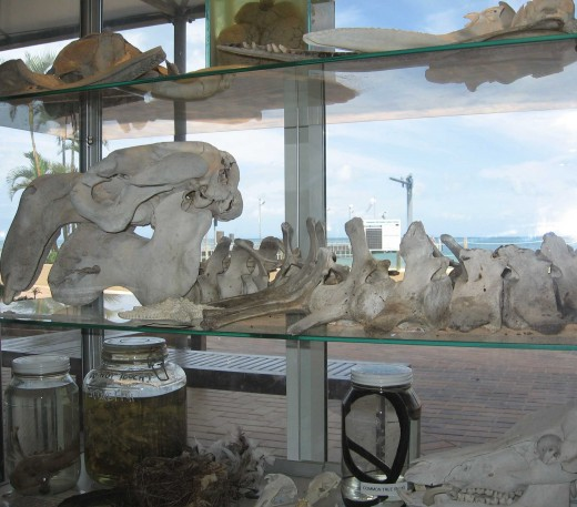 Marine Education and Conservation Centre at Tangalooma