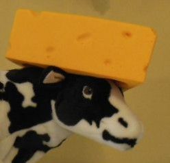 Cheese For Every Meal