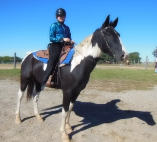 Flash is a Tennessee Walking Horse Paint.  He's 9 years old and has been showing in 4-H for about 4 years now.  I've had him for 6 years.  He's a really great horse!