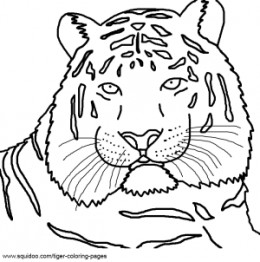 Realistic Tiger Face Coloring Pages